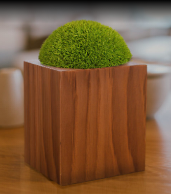 Einzelner Moosballen auf Holzstück